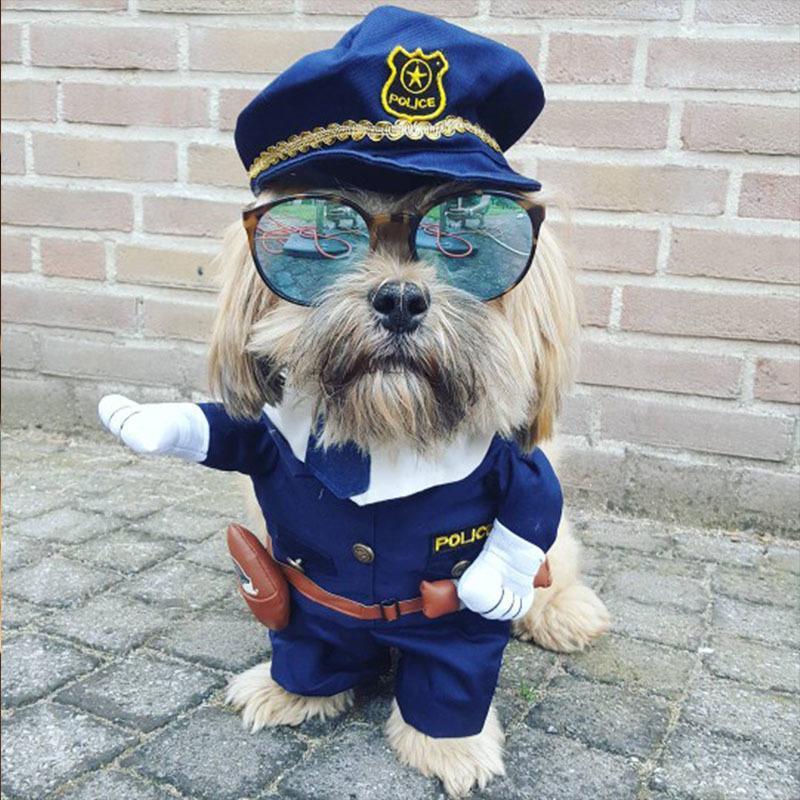 Roupa Engraçada Do Cão Fresco Pet Dog Costume Terno Roupa Do Filhote de Cachorro Casaco Roupas Para O Cão Traje Outfit Enfermeira Pet Terno