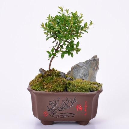 2021 Purple Sand Bonsai Pot Coarse Ceramic Flowerpot Meaty Calamus Indoor Potted Wenzhu Hand Color Yixing Thumb Small Creative Cj191226 From Quan09 24 48 Dhgate Com