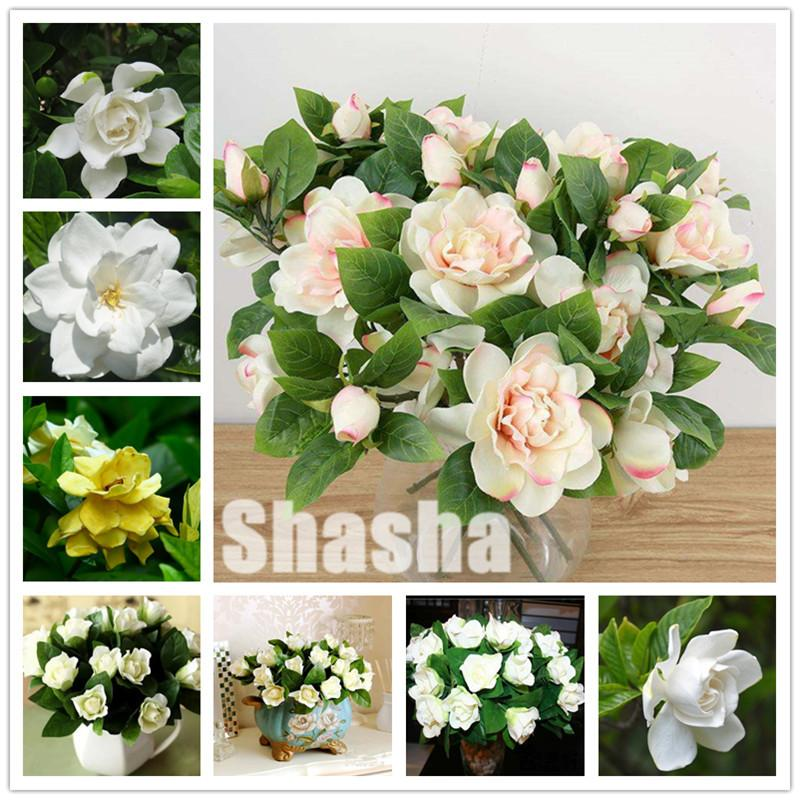 2021 Gardenia Bonsai Plants Seeds Indoor Flower Tree Plants Cape Jasmine Flower Flores Beautiful Home Garden Potted Flowers From Ymhpjq1 1 4 Dhgate Com