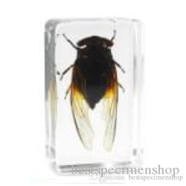 Black Cicada Specimen Acrylic Resin Embedded Insects Teaching Kits Transparent Mouse Paperweight Block Kids Science Learning&Education Tools