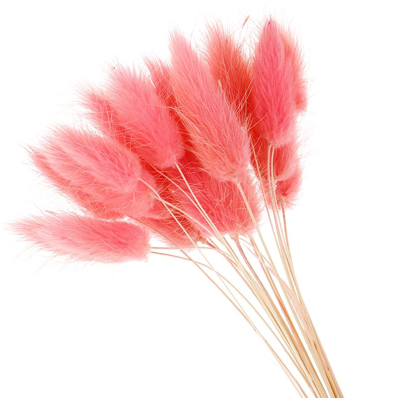 50pcs fiori secchi naturali peluche fiori artificiali bianchi colorati finti coniglio coda erba coda di volpe bouquet mazzi lunghi fiore artificiale
