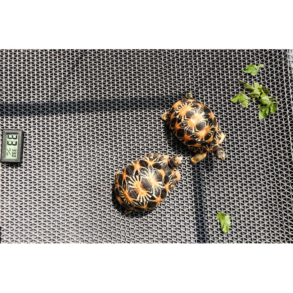Mat tortuga de tres-en-uno reptil caja de humidificación hidratante Alfombra Breeding Box Escalada estera del animal doméstico de limpieza