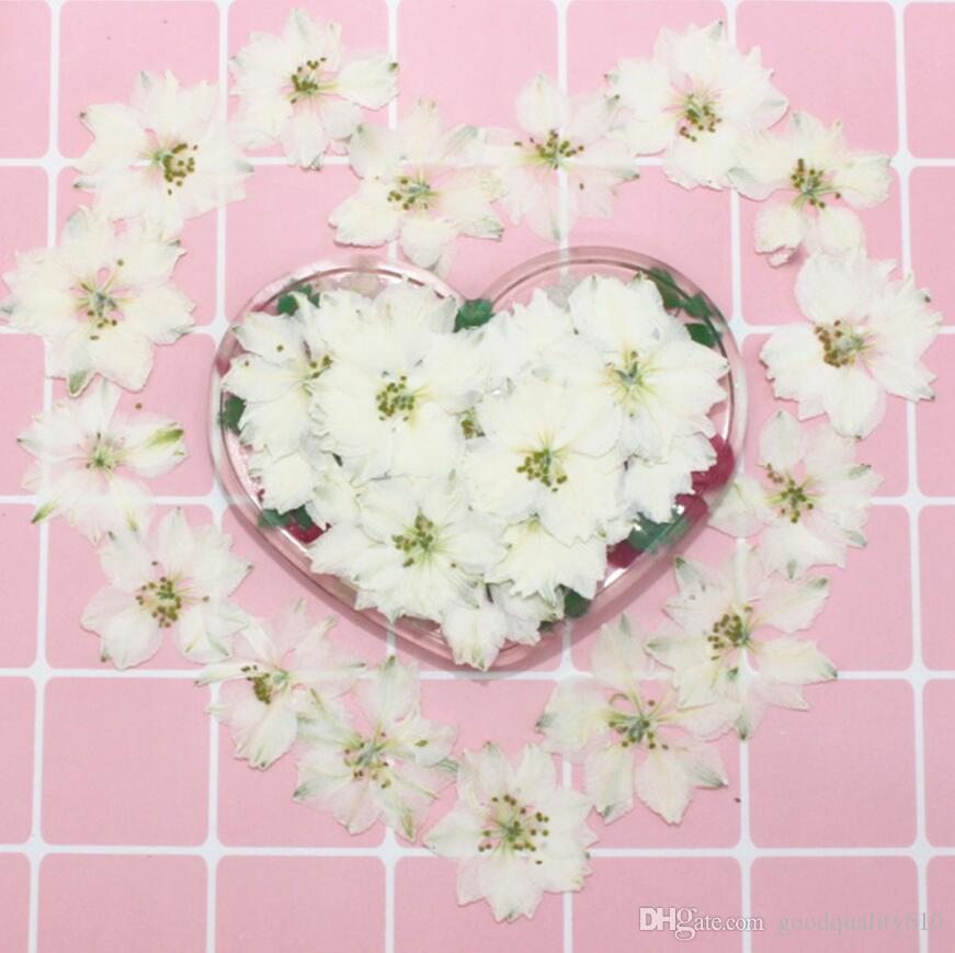 120pcs Pressed Dried White Consolida Ajacis Flower Plants Herbarium For Resin Jewelry Making Postcard Frame Phone Case Craft DIY