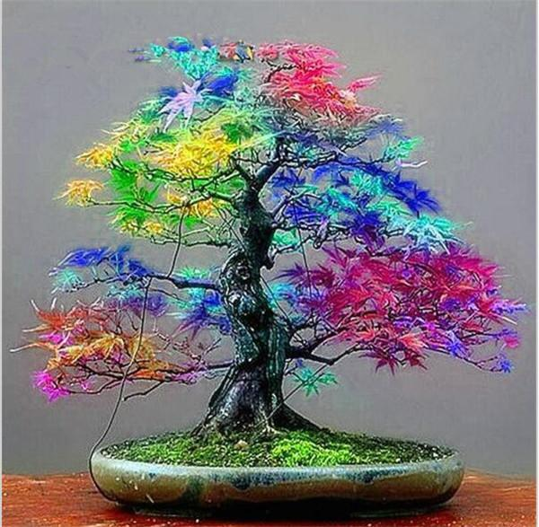 2021 100 Genuine Bag Seeds Multicolor Maple Bonsai Tree Plant Flower Japanese Mini Maple Tree Planta For Courtyard Home Garden From Ymhzpy 1 1 Dhgate Com