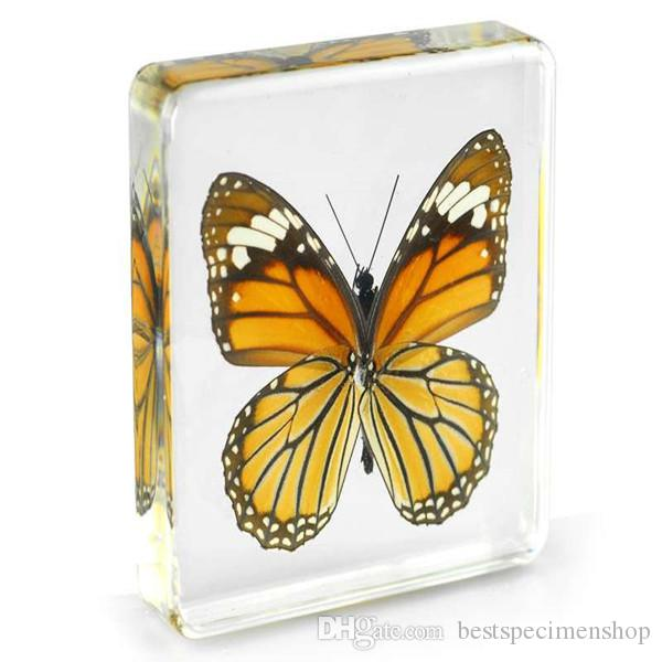 Acrylic Resin Embedded Real Butterfly Specimen Paperweight Transparent Mouse Insect Learning&Education Toys Kids Biology Science Kits Gifts
