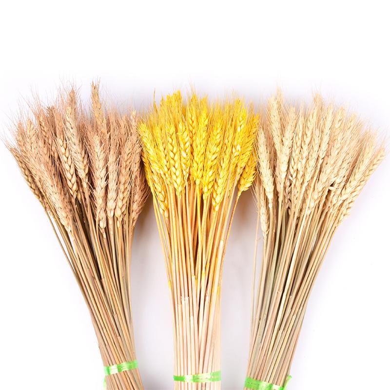 Orejas secas harina de trigo 50PCS DIY de la decoración del hogar del libro de recuerdos de trigo Branch apoyos naturales para el partido del ramo de decoración de la boda