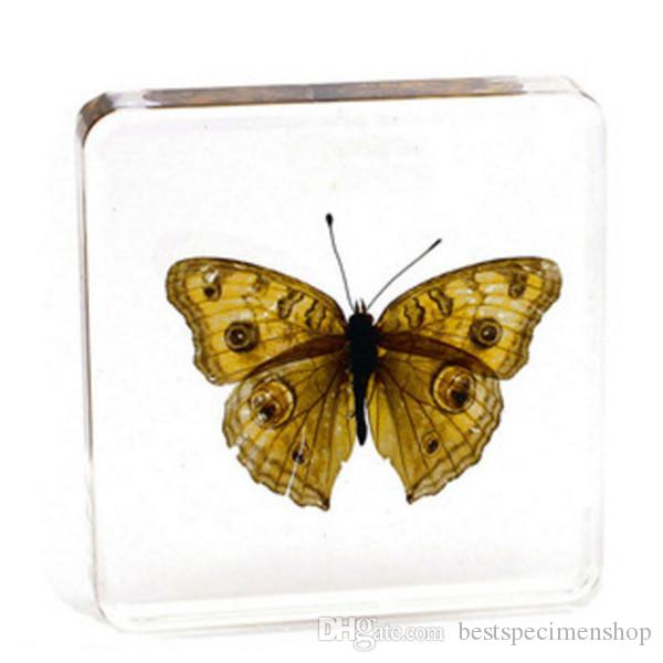 High Quality Butterfly Specimen Resin Embedded Gifts Children Science Learning&Education Kits Transparent Paperweight Type Discovery Toys