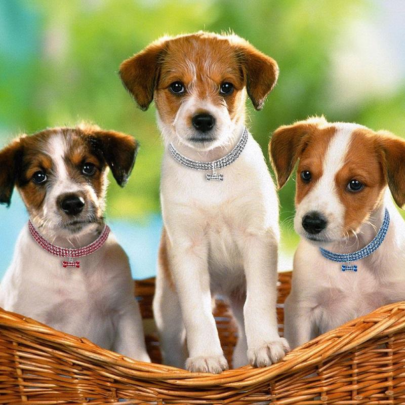 10pcs Bling Rhinestone Pet Dog Cat Collar Кристалл Щенок Чихуаху ошейники Поводок для Маленьких Средней Собаки Mascotas ювелирных изделий с бриллиантами