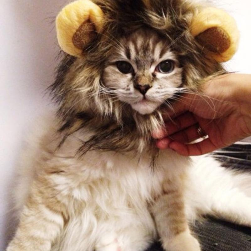 Высокое качество смешные милые домашние животные костюм косплей львиная грива парик кепка шляпа для кошки хэллоуин одежда необычные платья с ушами осень зима