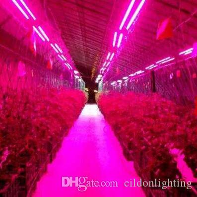 Russia T8 Grow Plant Lights G13 90cm 60cm 14W AC185-245V LED Tubes Fluorescent Bulbs Lamps Full Spectrum Lighting Growing Vegetables China