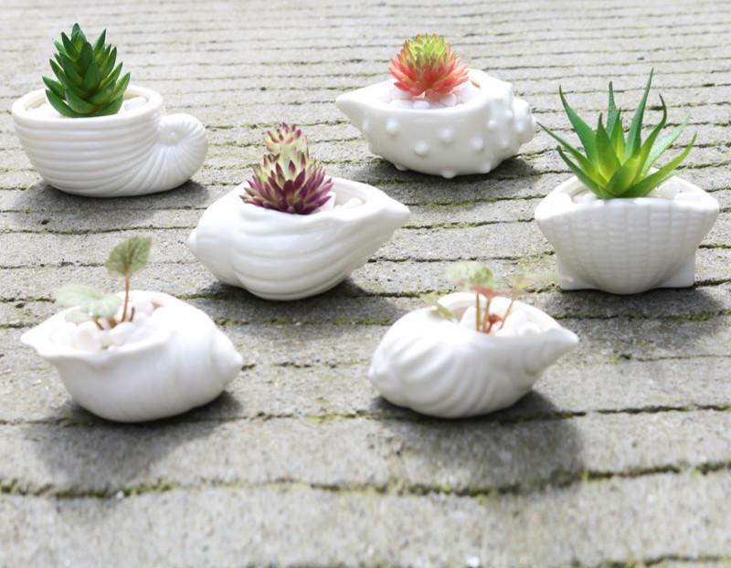 Mini Fleshy Flower Pot Thumb Pot White Shell Conch Ocean Succulent Flower Pot Ceramics Hot Sale Free Shipping
