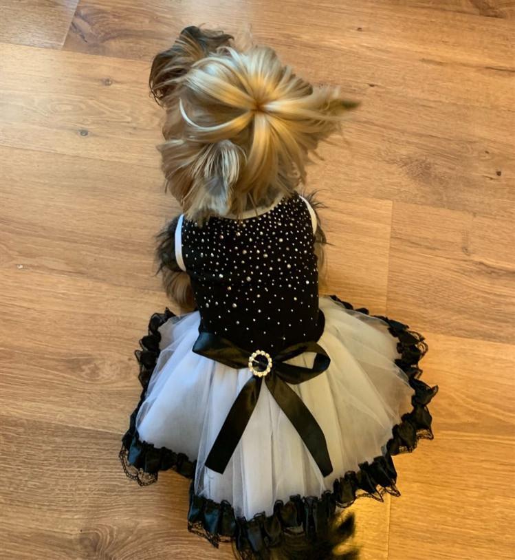 Köpek Yaz Düğün Köpekler Elbiseler Köpek Tutu Elbise Dantel Elbise Sevimli Pet Kedi Prenses Giyim Elbise Parti Elbise