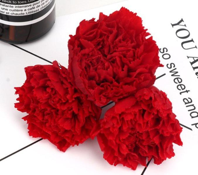 Un regalo de color clavel grado múltiples para la madre natural caliente larga vida real de la flor orgánica y material de dulce flor presente DIY naturales
