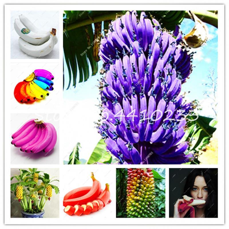 2021 Bonsai Mixed Banana Melon Plants Beautiful Garden Bonsai Flower Plant Pot Edible Golden Elongated Sweet Fruit Bonsai For Garden From Ymhqw1 1 57 Dhgate Com