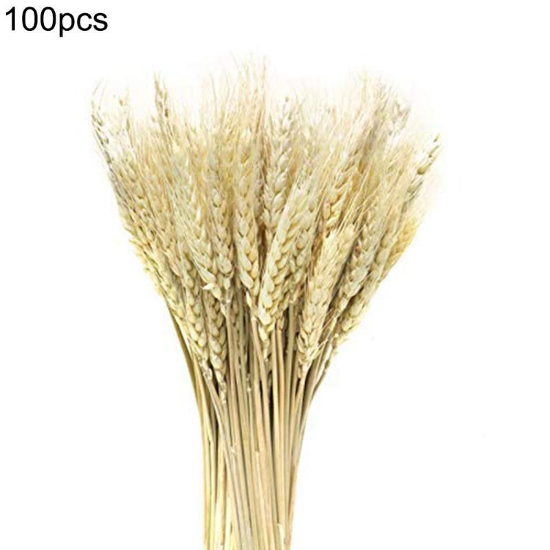 Accueil Bureau Décor 100pcs / lot artificiel naturel Blé Fleurs séchées Bouquet simulation haute Plantons pour soirée de mariage Décoration