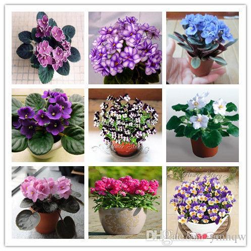 100 Adet / torba Afrika Menekşe Bonsai Çiçek Bahçe Flore Açık Çiçeklenme Menekşe Çok Yıllık Herb Bitki Pot Ev Bahçe Dikim Için