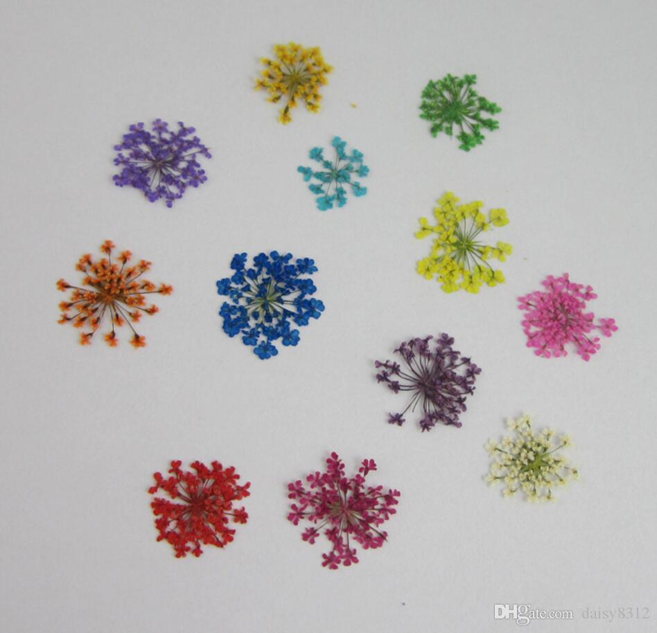 100pcs Pressed Dried Ammi Majus Flower Plants Herbarium For Times Gems Jewelry Pendant Rings Earrings Flower Making Accessories