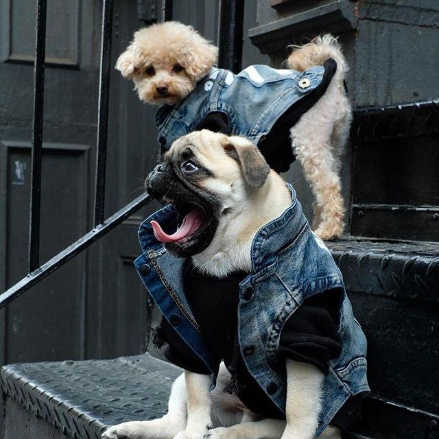Fashion Dog Clothes Pet Clothes Cat Law Fight Myna Teddy Schnauzer Dog Autumn Winter Summer Thin Jean Vest