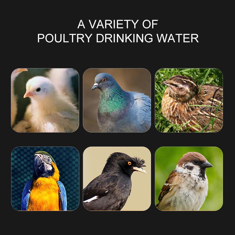 Volaille automatique Quail eau potable Buveur Coupe des oiseaux Coop Chick alimentation Coupe de la volaille Animaux sauv Ferme