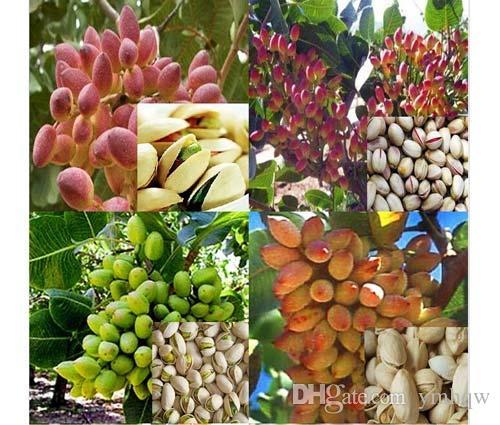 Somun ağacı Antep Fıstığı tohumları Çin Pistacia nadir açık meyve ağacı tohumları tropikal bitki bonsai tohumları 5 adet / torba Ücr ...