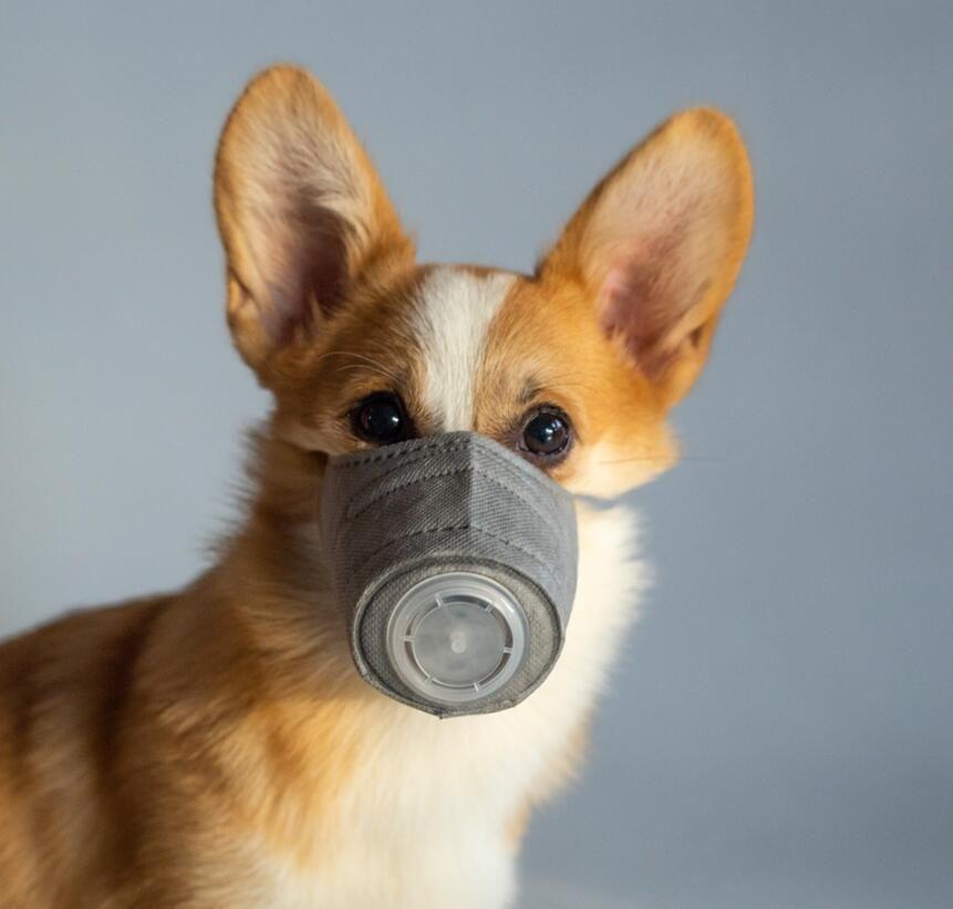 Respirant Pet Masque Masque Coton Chien visage Masques respiratoires bouche anti-brouillard PM2,5 empêcher la poussière Masque de fournitures pour animaux de protection DHL