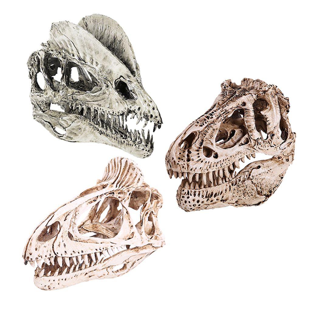 3pcs 1/3 Escala dinosaurio Dilophosaurus cráneo de la resina Modelo coleccionables