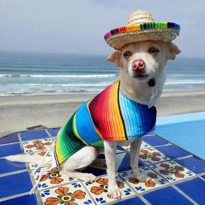6 Straw Mini Mini mexicano partido Pacote Natural Sombrero / Chapéu, Suprimentos Tabletop Partido, Mexican Fiesta Hat, Fiesta Tabela Decorações,