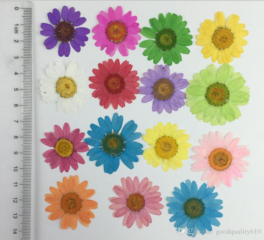120pcs Pressed Press Dried Daisy Dry Flower Plants For Epoxy Resin Pendant Necklace Jewelry Making Craft DIY Accessories