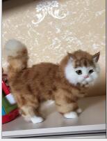 WYZHY gato de simulación de decoración del hogar decoración de escritorio creativa foto accesorios de fotografía para enviar regalos de los amigos 23 * 9 * 20cm