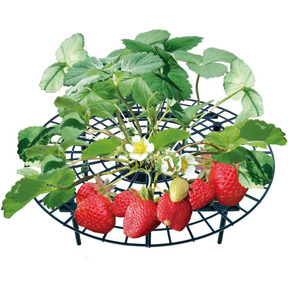Erdbeere Balkon Rahmenhalter-Standplatz Pflanzen von Obst Unterstützung Pflanze Blume Kletterpflanze Rack-Säule Floristik Gartenzubehör Ständer