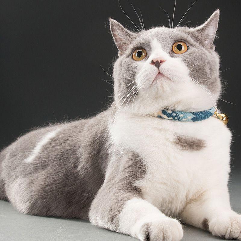 Мультфильм Cute Печатные Домашние животные Cat ошейники ручной работы Регулируемый воротник щенок Кошки ожерелье с Белл в японском стиле собак Bow Tie