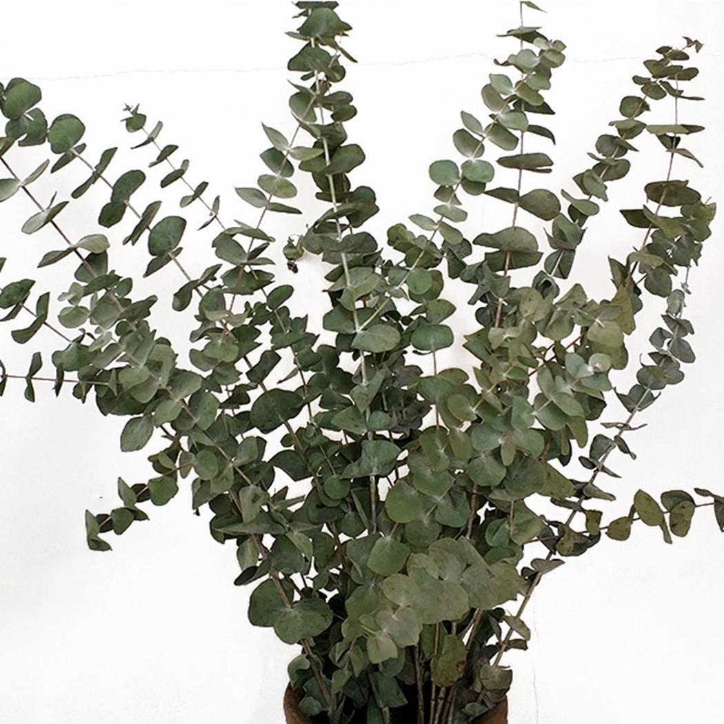 10pcs Rami di piante Foglie Mazzo di foglie di eucalipto essiccate decorative Rami di foglie per la decorazione domestica di nozze al coperto