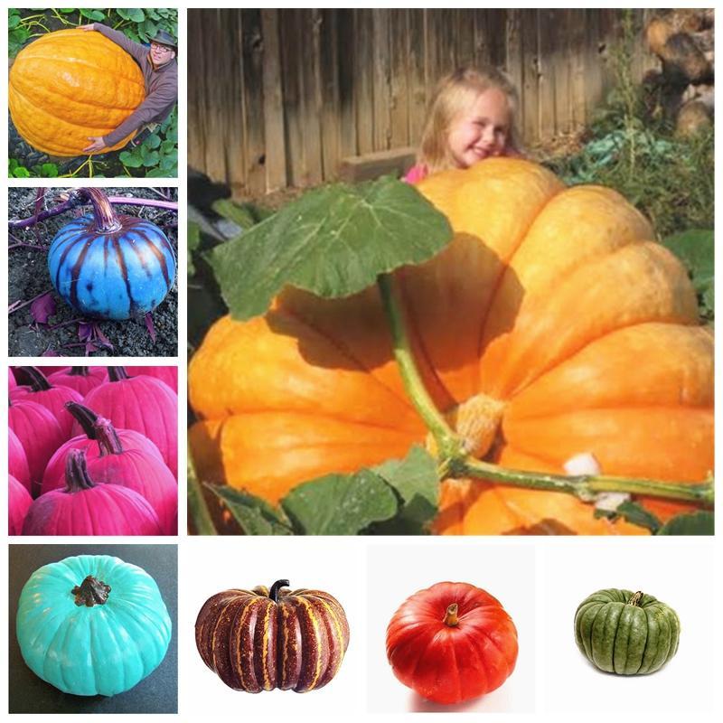 20 шт Семена гигантские тыквенные растения овощные фрукты бонсай счастливая ферма для дома садовые растения экзотический заинтересованный подарок
