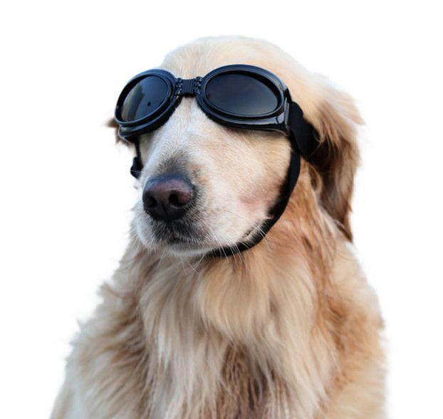الحيوانات الأليفة نظارات مناسبة لجميع الحيوانات الأليفة المتوسطة والكبيرة الرياح وماء حماية واقية من الشمس فوق البنفسجية، وشراء متعددة الاستخدامات الشحن DHL