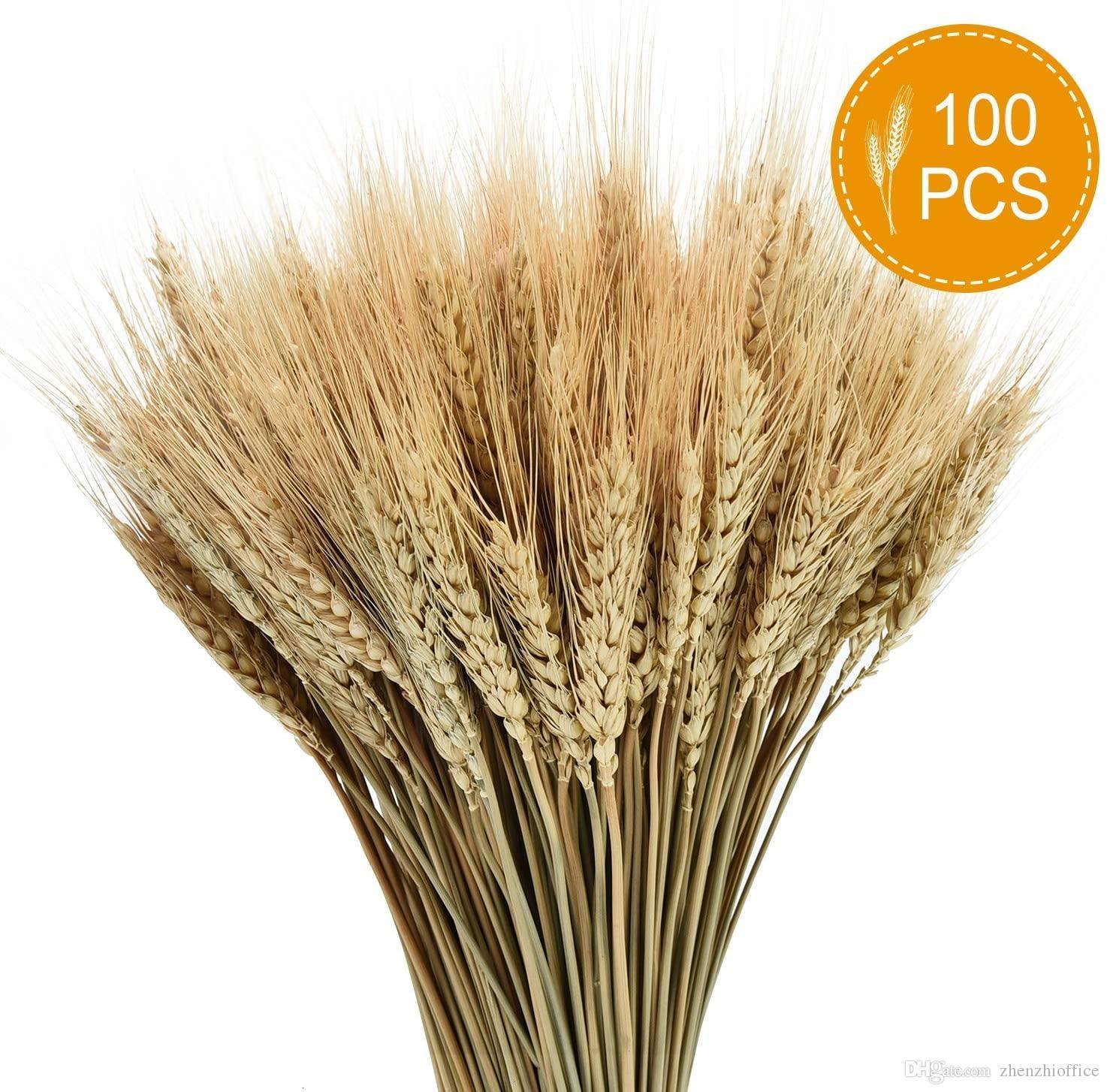 Los tallos secos de trigo, 100 tallos de trigo gavillas para la decoración de la boda Vector la cocina del hogar (15,7 pulgadas)