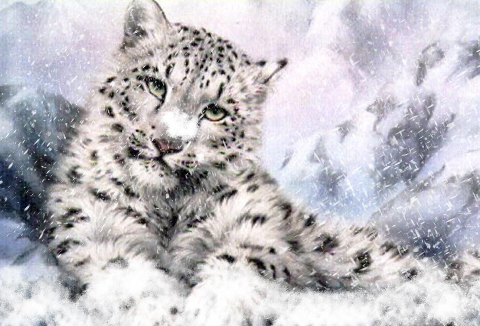 Snow Leopard Cub rilassante nella neve Arte della Seta di poster 24x36inch (60x90cm) 089
