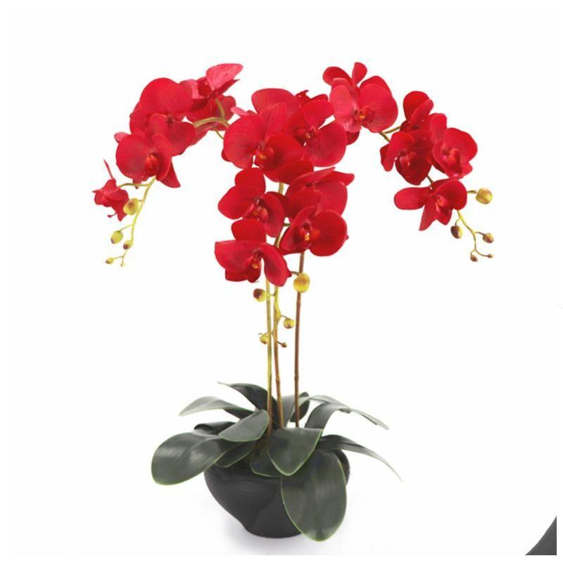 Indigo Red Phalaenopsis Orchidee 7 capi in lattice reale tocco decorativo Orchidee fiore di cerimonia nuziale Orchidea partito floreale di trasporto libero