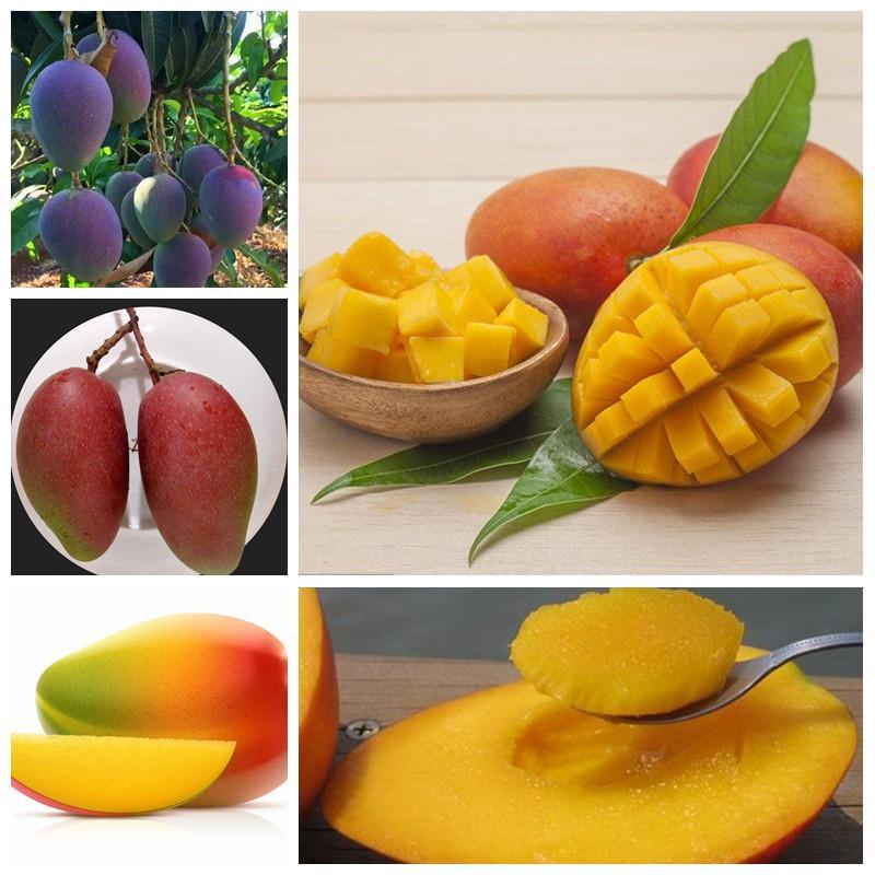 2021 Bag Seeds Rare Bonsai Fruit Tree Planta Mini Mango Plant Mango Tree Garden Diy Pot Planting Home Garden Semente For Flower Pot From Ymhzpy 4 31 Dhgate Com