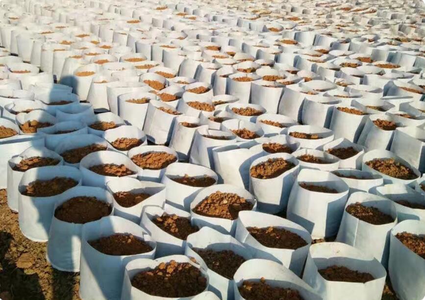 بيئة غير المنسوجة النسيج قابلة لإعادة الاستخدام لينة من جانب وتنفس للغاية اواني تنمو زراعة حقيبة مع مقابض كبيرة الغراس زهرة