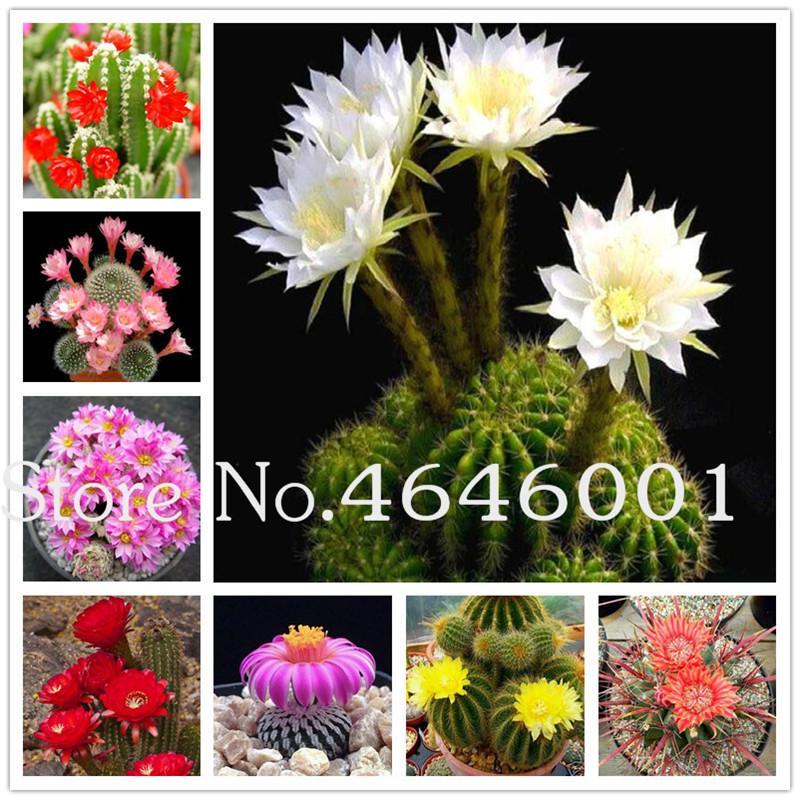 Bonsai 300 Adet Tohumları Nadir Kaktüs Çiçekli Bitkiler Hibrid Pseudotruncatella Etli Bonsai Ham Taş Kaktüs Saksı Bitkileri 2020 Yeni