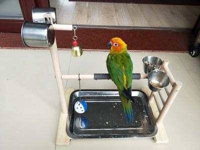 39 * 36 * 23 centímetros Pássaro Perches Parrot Parque Feeder Tray Parrot Sino Tabletop Parrot playstand Para Conure Cockatiel Finch Periquito