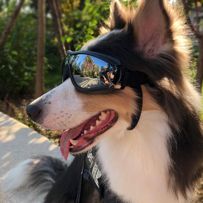 أحدث النظارات الحيوانات الأليفة، مستلزمات الحيوانات الأليفة، نظارات واقية، ماء، windproof، واقية من الشمس والنظارات الكلب مقاومة للأشعة فوق البنفسجية. شراء 50 قطعة أو أكثر باستخدام DH