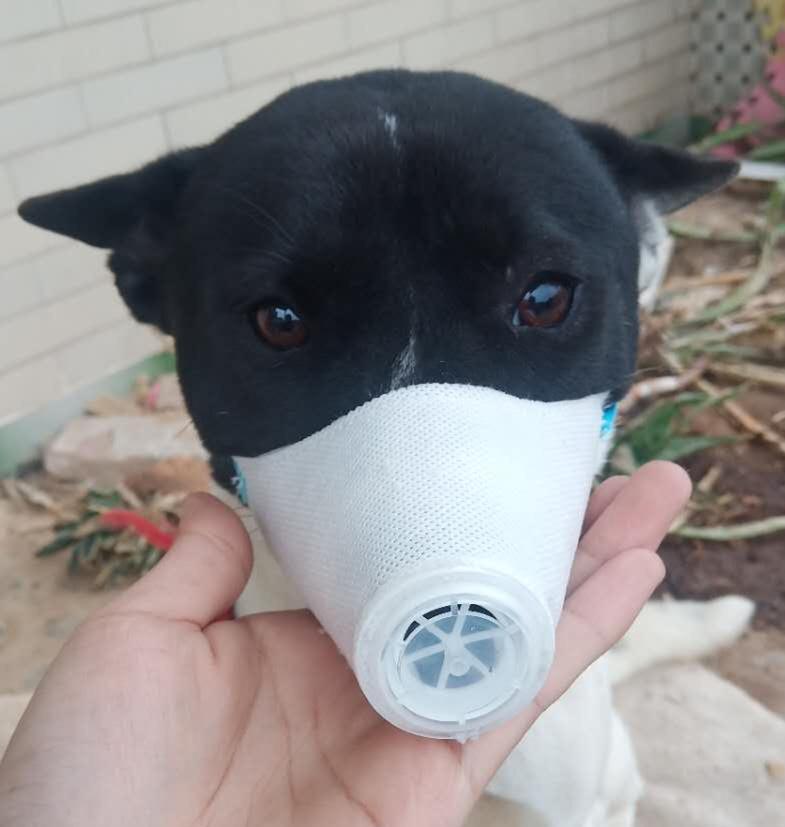 2020 Pet эпидемическая профилактика мягкое лицо маска для рта Pet респираторный PM2. 5 Фильтр анти-пыль газовое загрязнение морда анти-туман дымка маски для собак