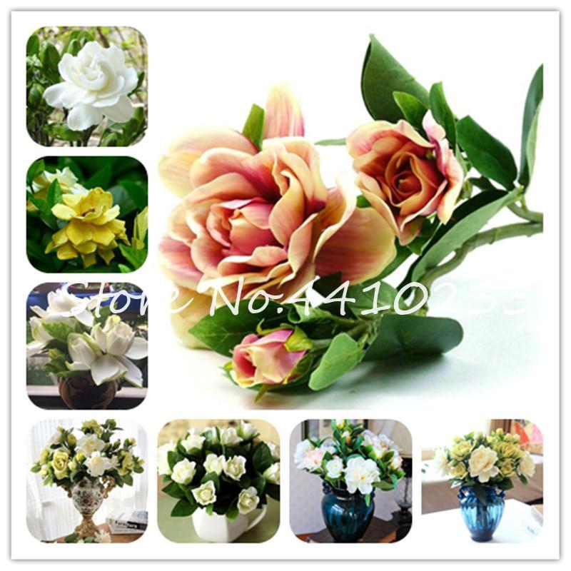 200 PC / porción Gardenia Bonsai Plantas de interior Plantas semillas del árbol de la flor de jazmín del cabo Semillas * Hermosa casa Jardín Flores plantadas Fácil crecen
