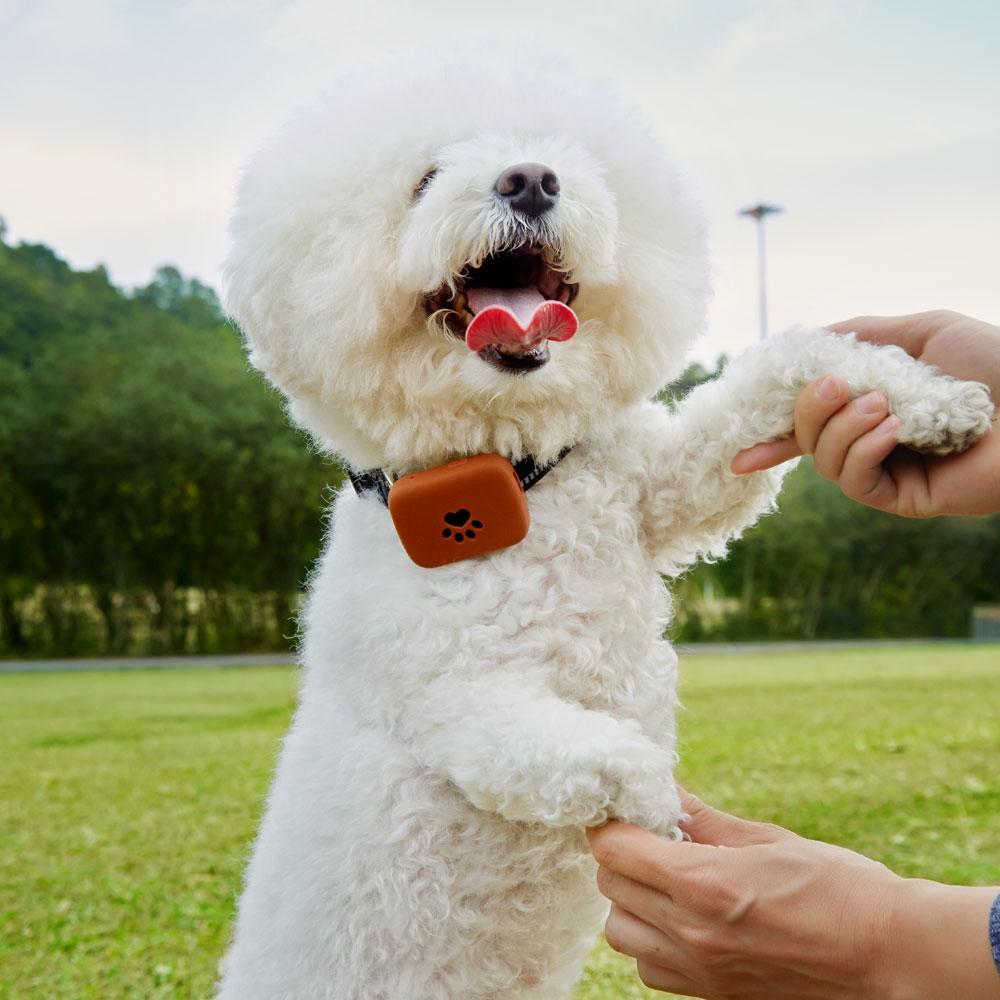 Indicador LED Mini Pet GPS Tracker impermeável inteligente GPS Tracker com coleira para animais de estimação Cat Dog GPS + LBS Local Livre APP