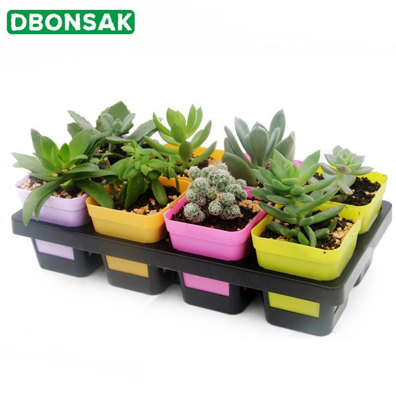 8/20/24 Delik Tepsi Hücreler Cactus succulant Bean Lahanası Fideler Küçük Flowers Izgara Plastik Saksı Bitki Pot Tohum Tepsi