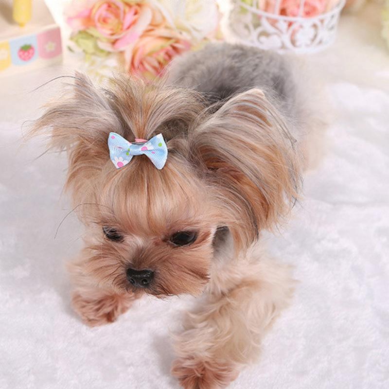 De haute qualité pour animaux Hairpin Chien capitule Animaux Bijoux Beauté Chien Hairpin Toilettage pour animaux Accessoires 2020 New Style