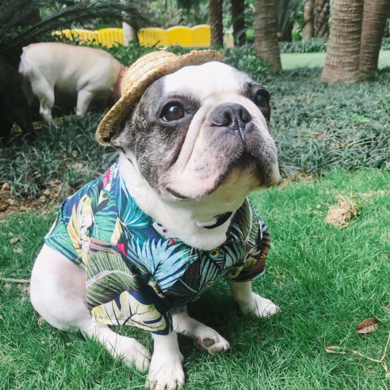 Yellow Hawaiian Summer Floral Shirt Puppy Apparel Costume For Small Pet Dog