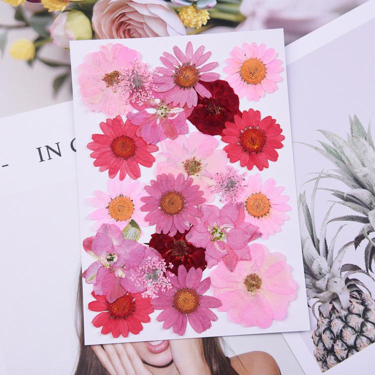 Variety Nature Pressed flower packege,Eternal rose for DIY Bookmark Gift Card Wedding invitations,Nail Art Facial decoration