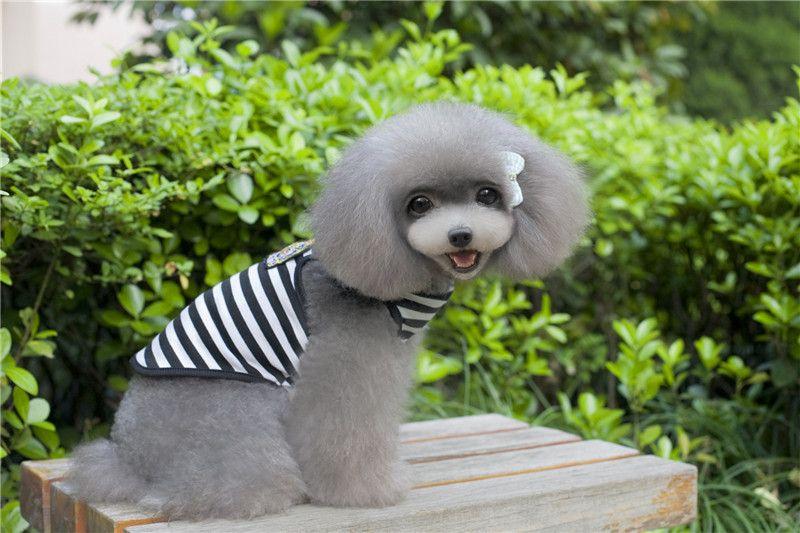 B24 Dog Verão Striped Vest - cão de verão britânico de design estilo de roupa Animais roupa mais barata preço de fábrica